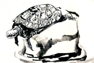 150720_turtle.jpg
