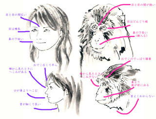 monkey001.jpg